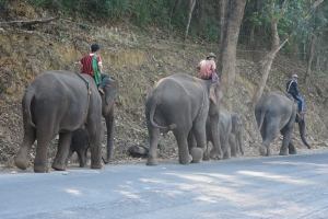 I was on the way to my mum in laws house in the mountains of Chiang Mai and saw this, what a great way to come across working elephants.