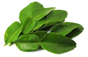 kaffir-lime-leaves